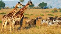 Safari-guide för rookies