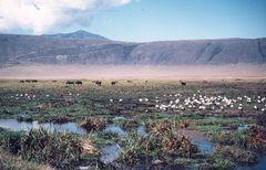 Världsberömda Ngorongoro är ett viltparadis inramat av berg i Tanzania.