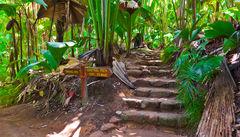 Vallee de Mai National Park på Praslin, där du finner världens största kokosnöt.