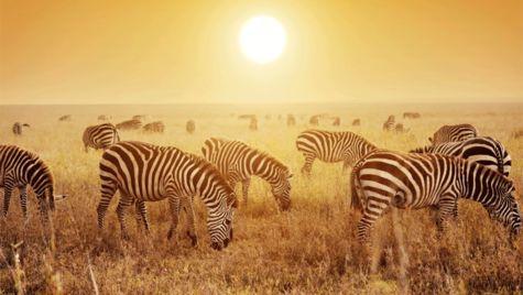 Här får du bästa guiden för safarinybörjaren.