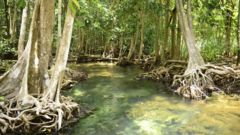 Följ med på kajakutflykt för att utforska mangroveskogen, grottor och hälsa på apor.
