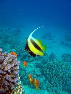 Röda Havet har en undervattensvärld utan dess like.