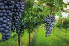 Roadtrip - Sju vingårdar på 5 dagar
