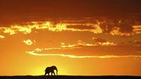 6 unika upplevelser i Sydafrika