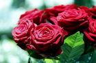 Romantisk weekend – Svit på Gothia fr 1395:-