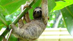 Costa Rica har ett rikt djurliv.