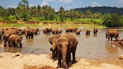 På Sri Lanka kan du uppleva elefanter på nära håll.