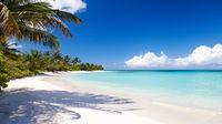 Karibiska vibbar i Puerto Rico