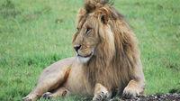 Afrikas 5 bästa safariländer