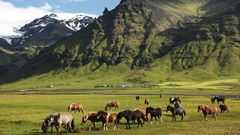 Upplev Island på hästryggen i juli.